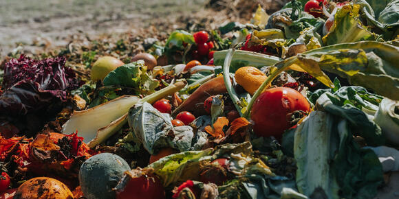 [Composting for dummies] Be informed – handle bio-waste responsibly