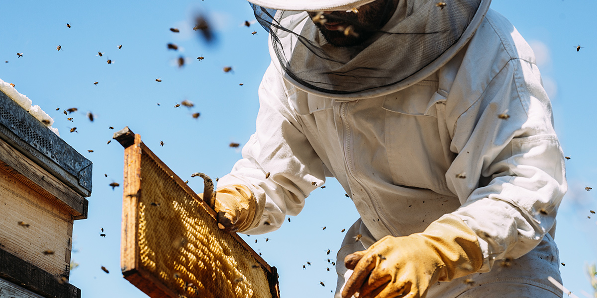 A chat with a Beekeeper