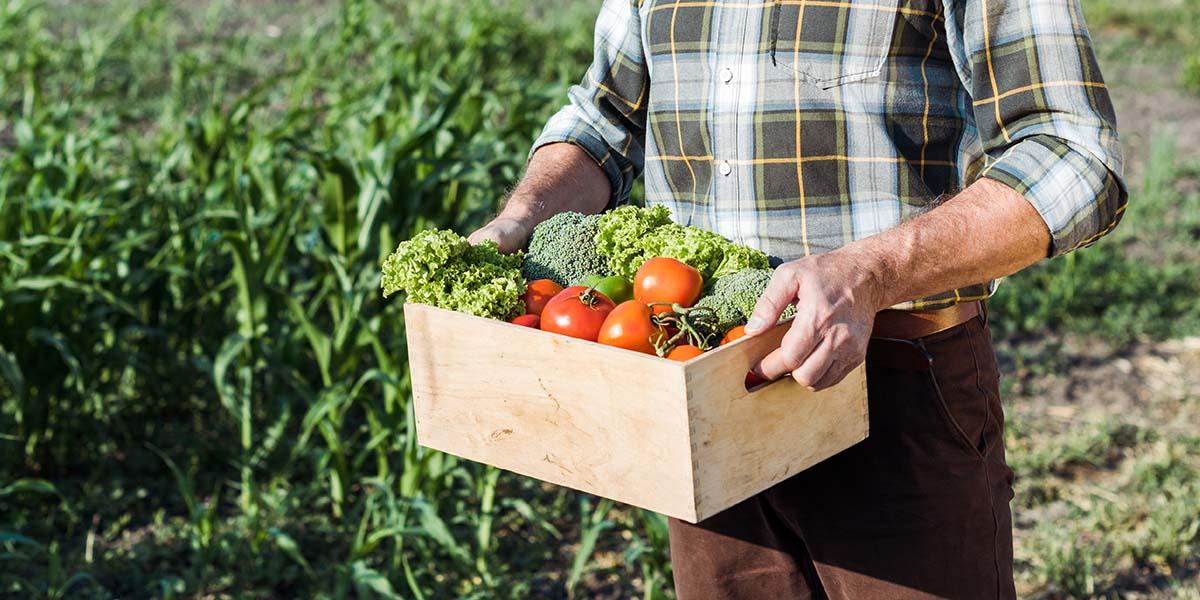Autumn Gardening tips - Fruit & Vegetable Gardens