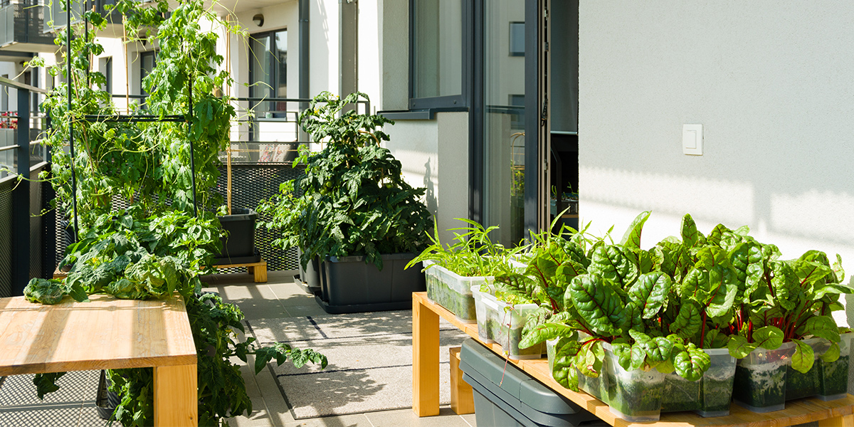 Balcony garden tips & tricks