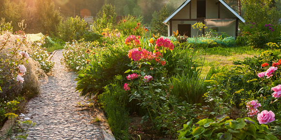 Beautiful garden with almost no effort: secrets of creating a close-to-nature garden