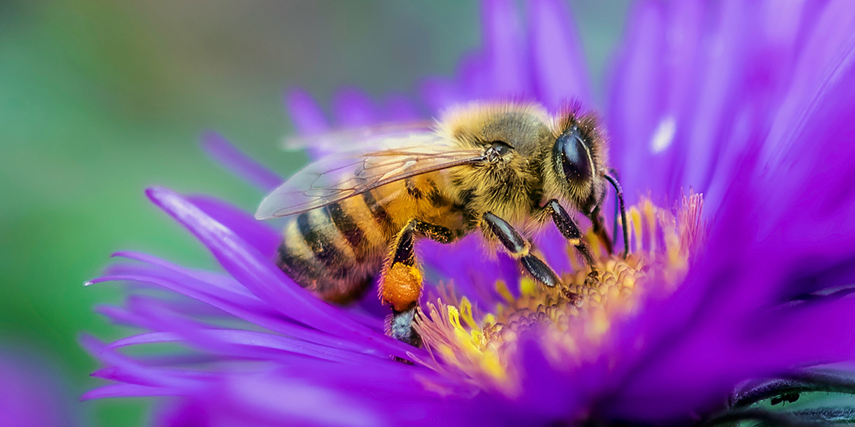 Bees polinate plants