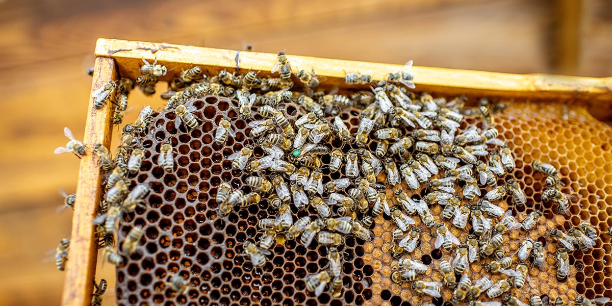 EM in Bee-Keeping