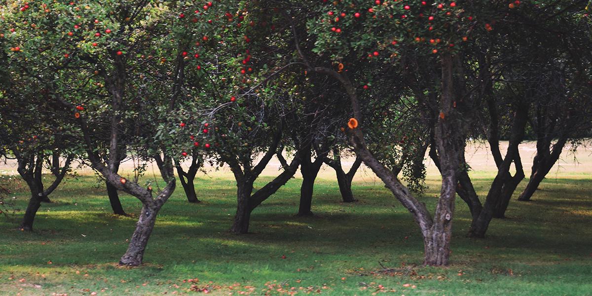 EM in Fruit cultivation