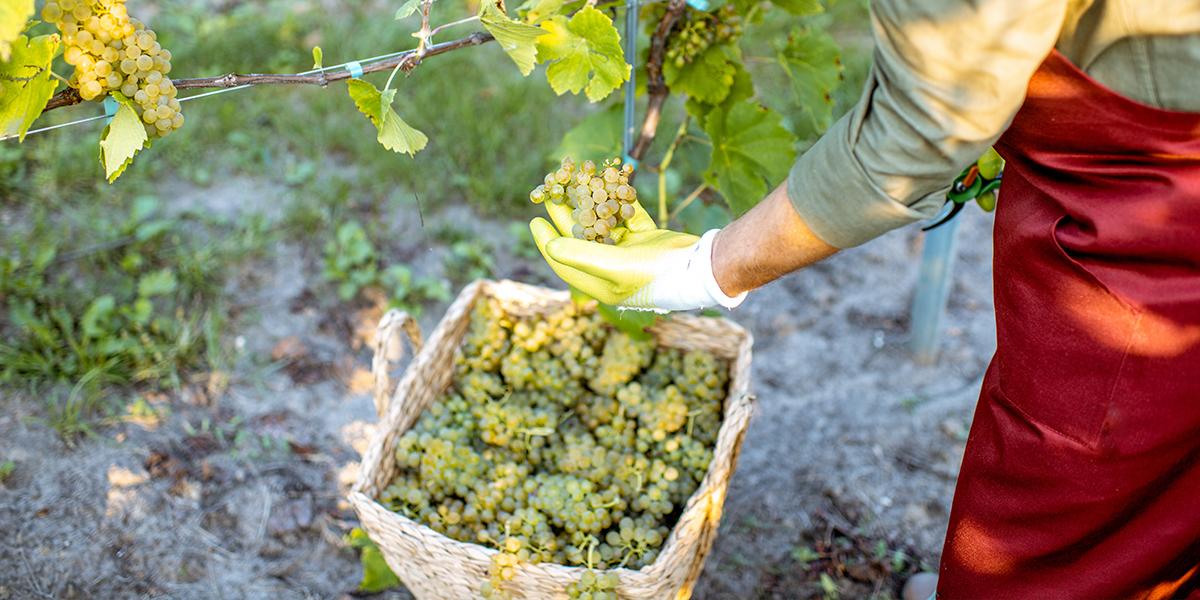 EM in Winegrowing