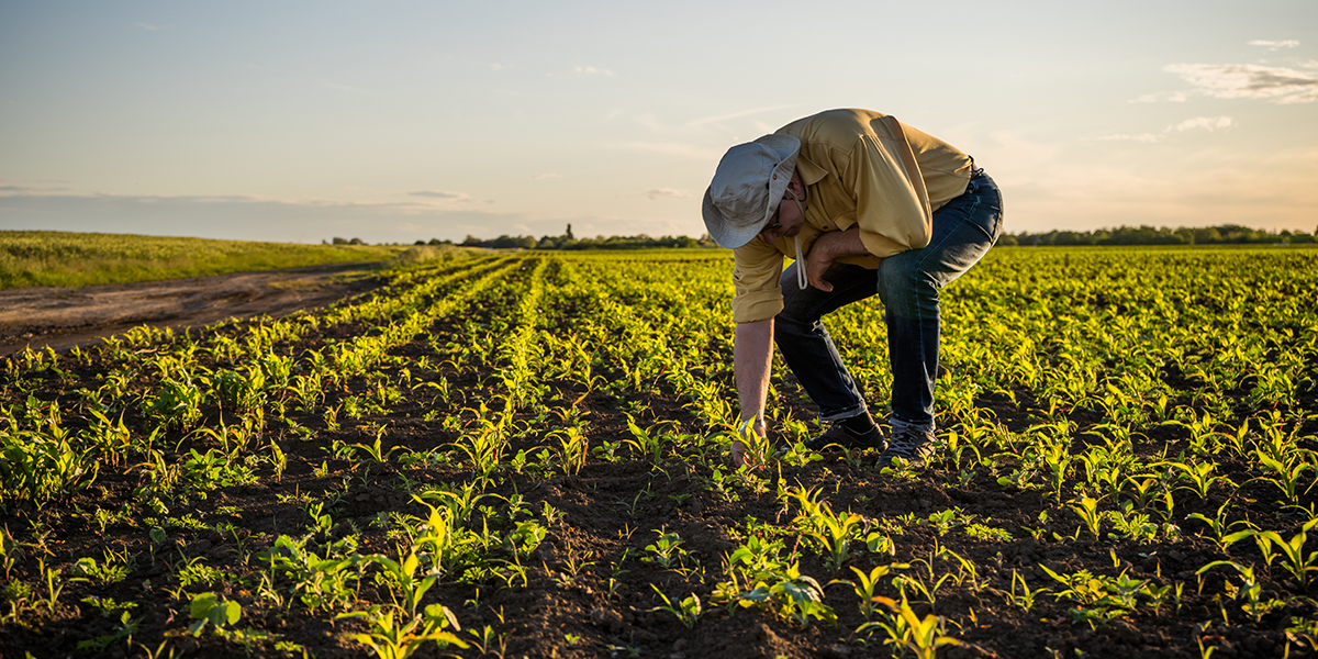 Effects and Benefits of Effective Microorganisms in Agriculture