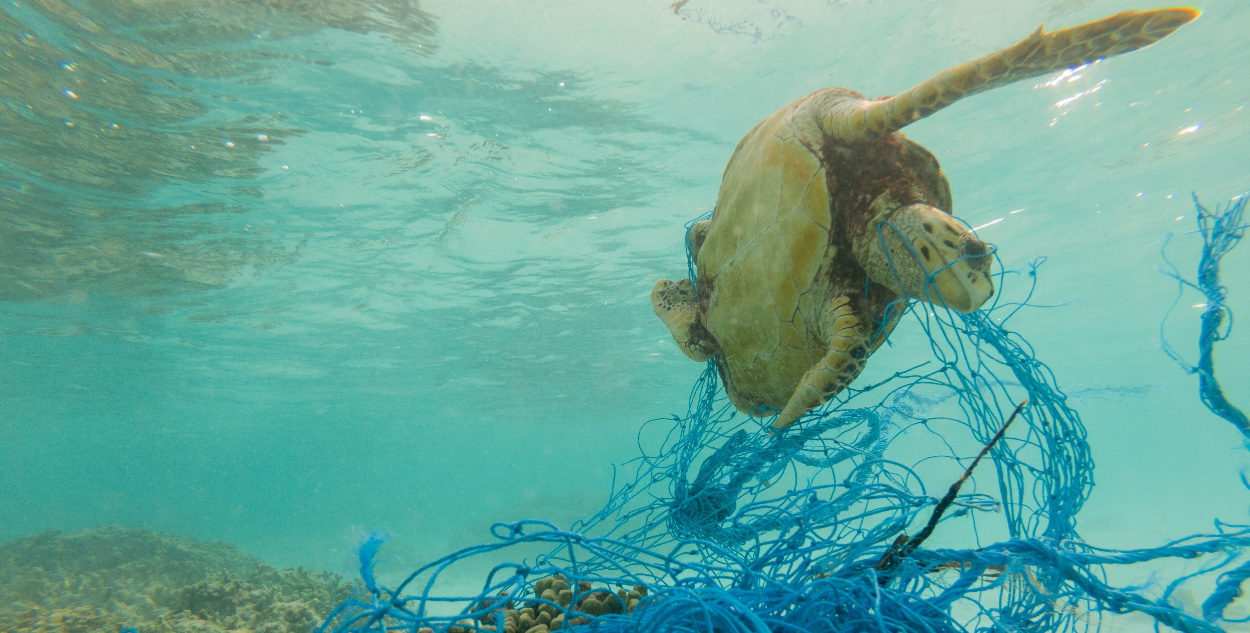 Fishing nets are deadly for the environment