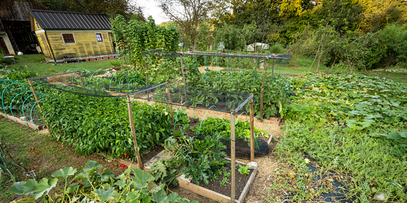 Growing your own food is a thing again