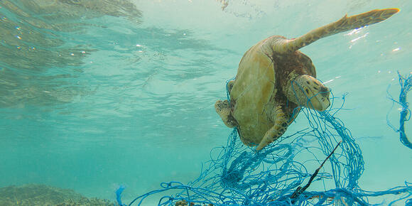 How can you contribute to solving ocean pollution?