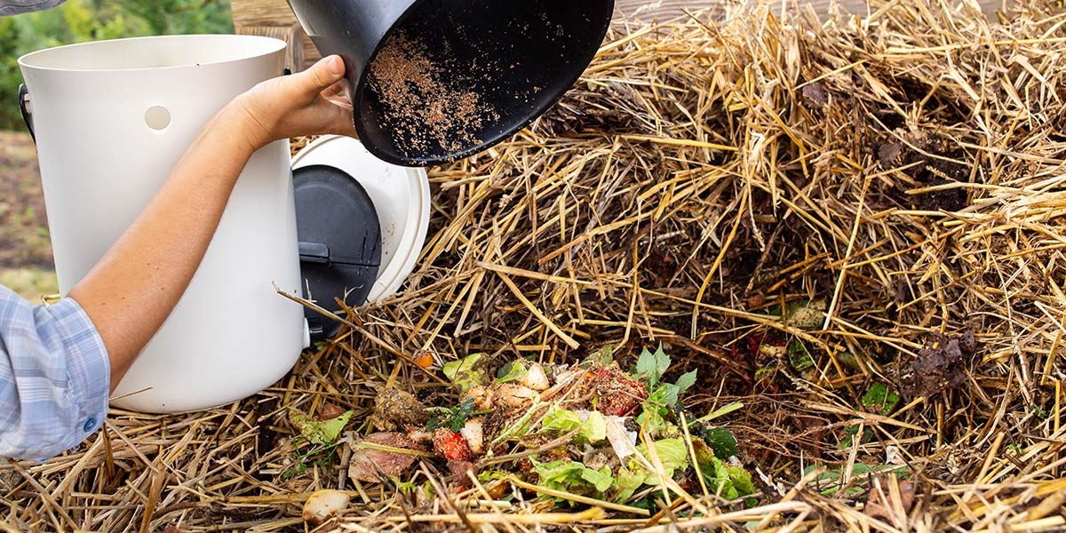 If you are a Bokashi Organko user, add your fermented content to the compost pile