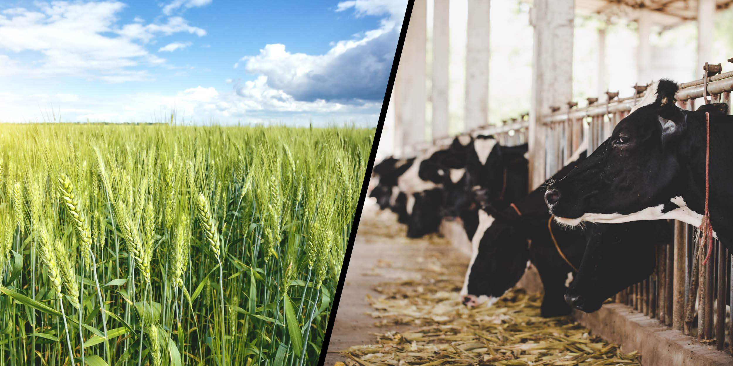Is meat production hurting our planet