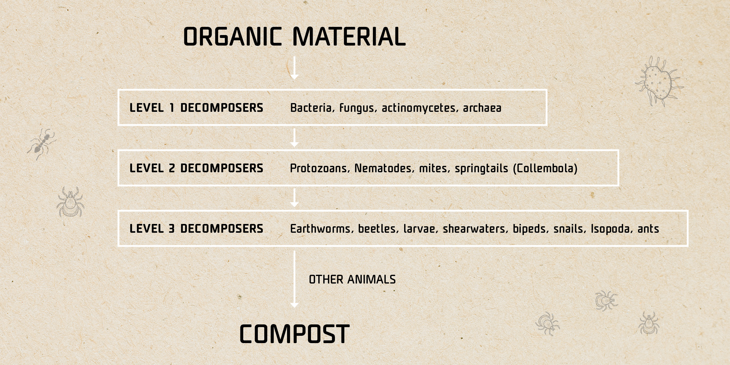 Organisms involved in composting - infographics