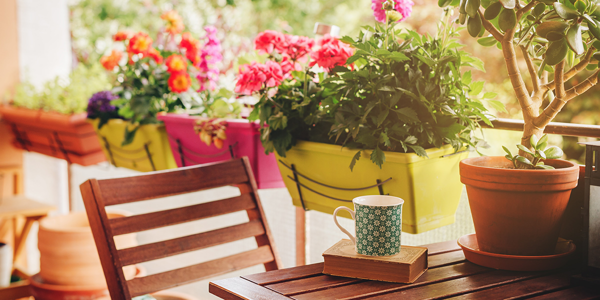 Perfect plants for your balcony garden