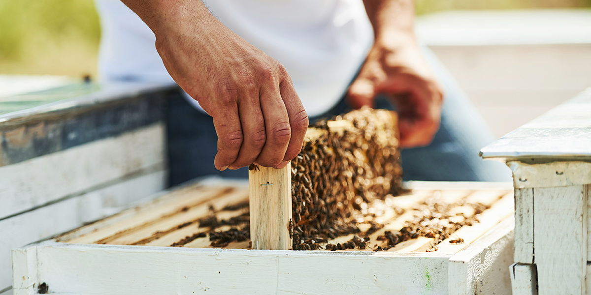 The hard-working bees