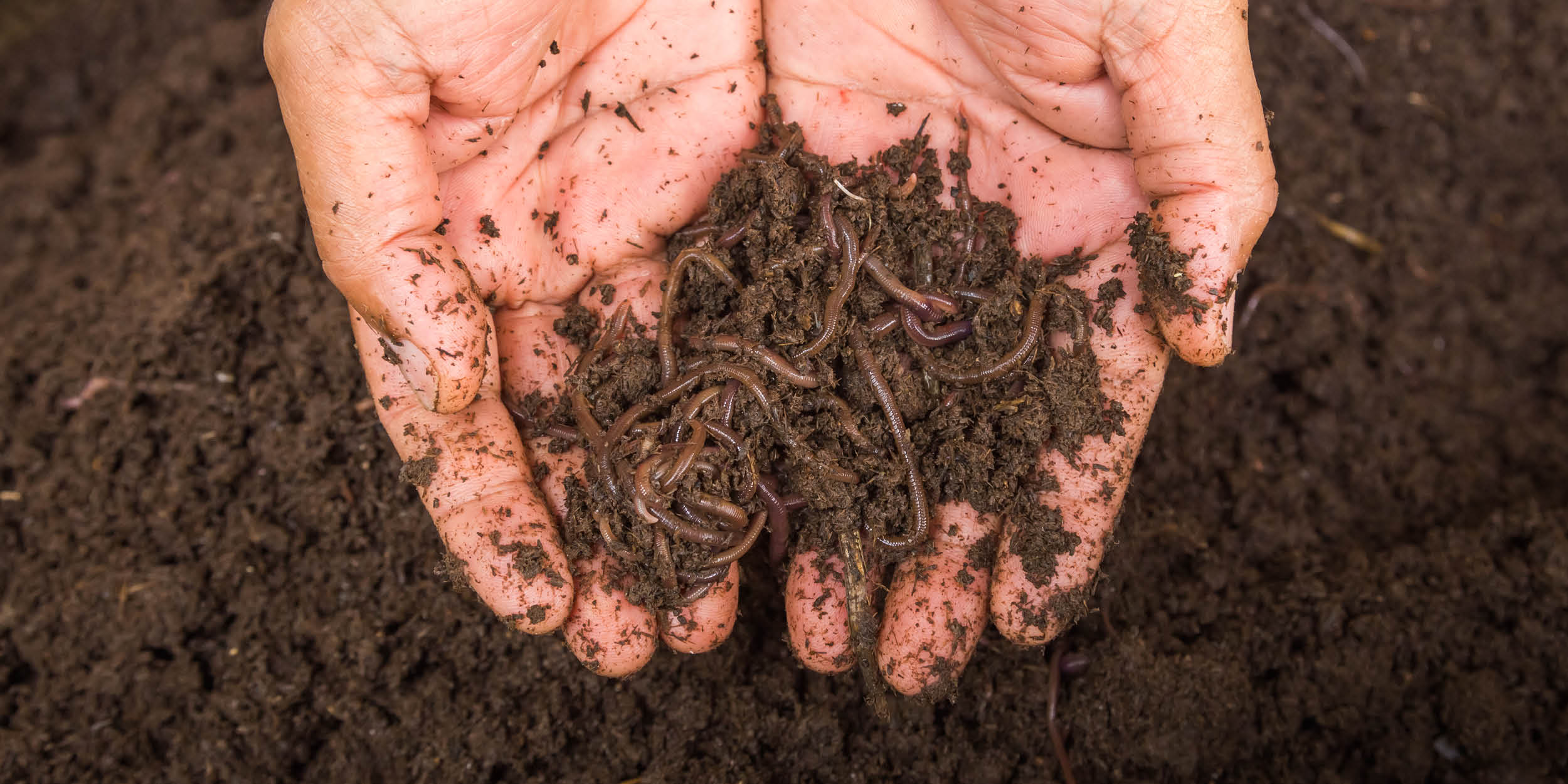 What is vermicomposting