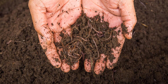 Difference between Bokashi composting and vermicomposting