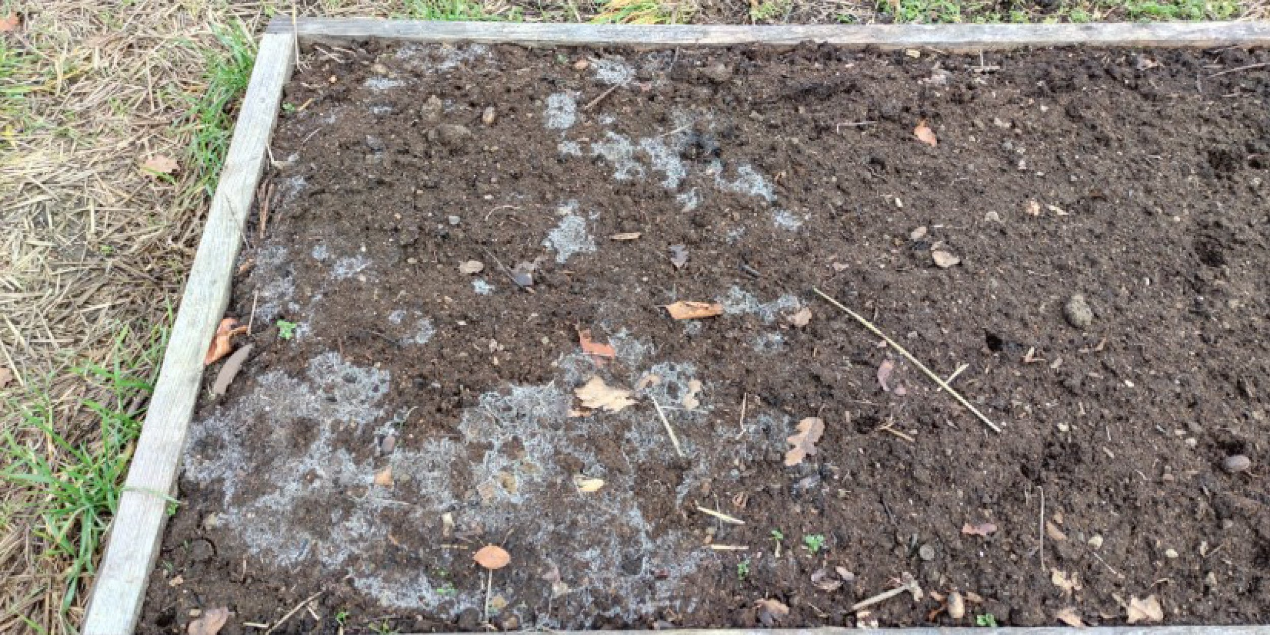 White Mold on The Garden Beam