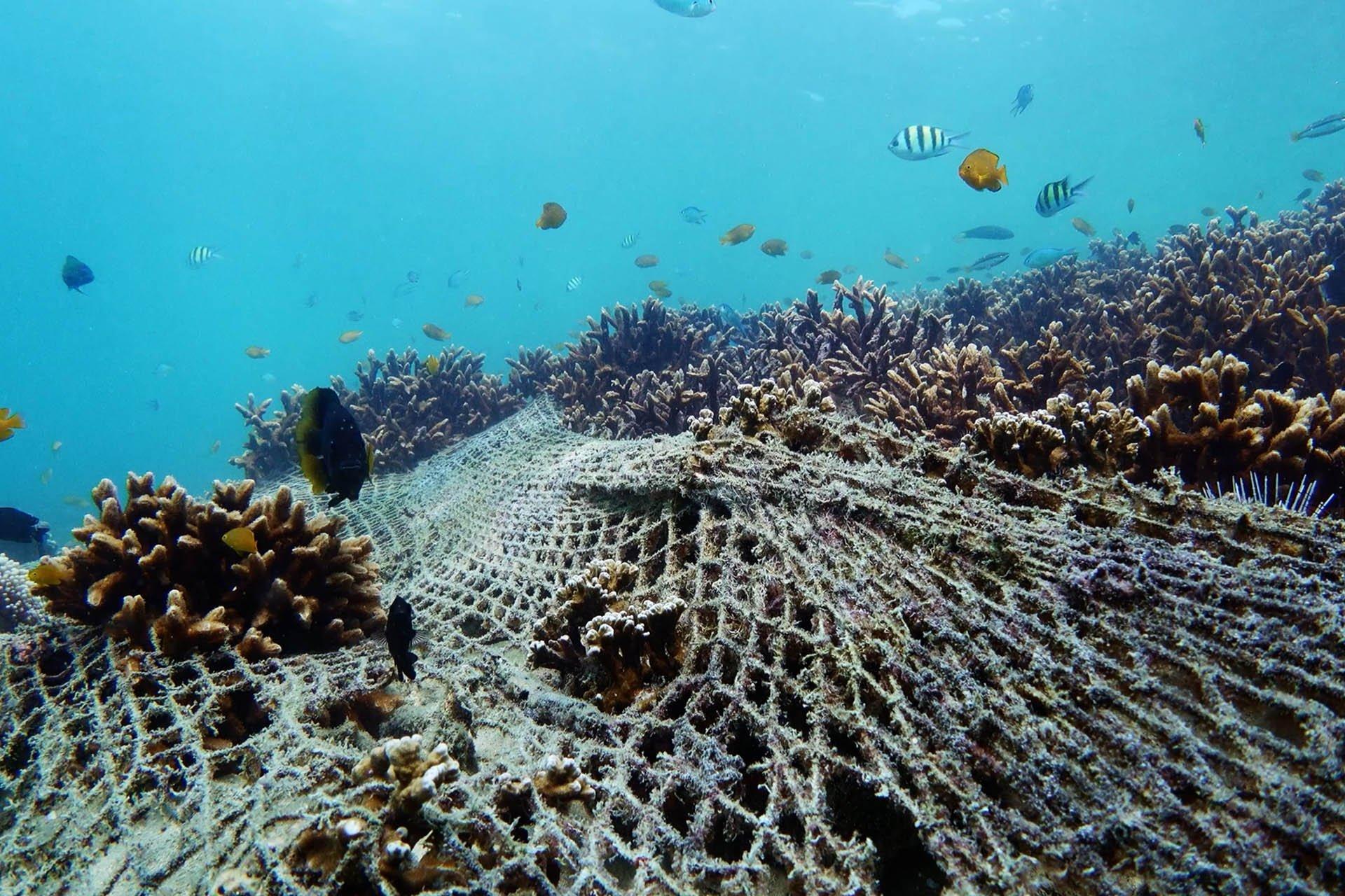 Prevent pollution with Bokashi Organko 2 Ocean